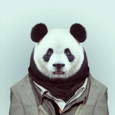 Suspected Imminent Monitor operator uses a panda bear disguise